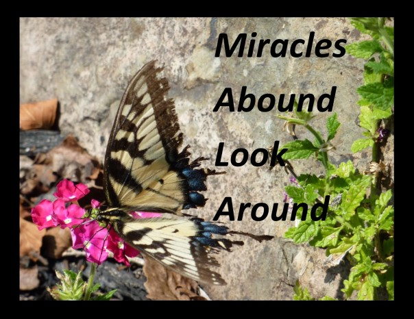 miracles-abound
